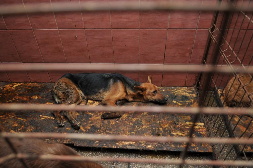 Câine în adăpostul Danyflor SRL