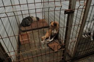 Câini în adăpostul Danyflor/foto: Pet Hope