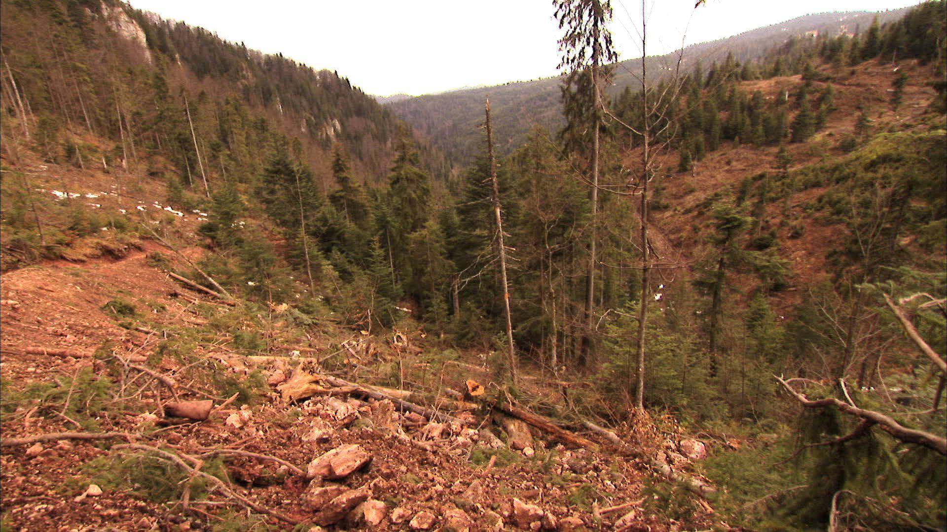 De aici a fost tăiat lemnul ajuns jos