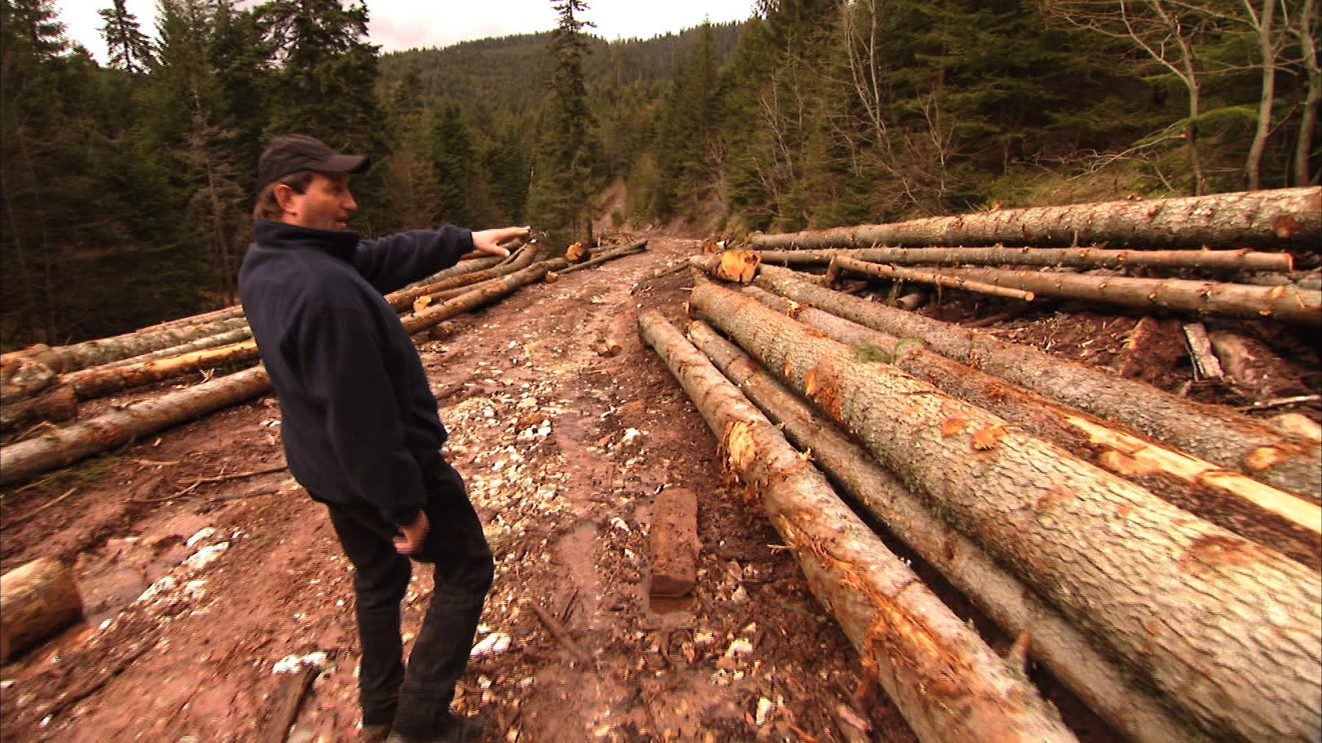 Marinel Stan ne explică că doar doi, dintre acești arbori, ar fi suficienți pentru un an întreg unei familii din Gârda.