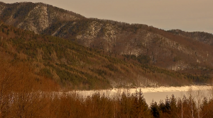 Padure Valea Munteli 1