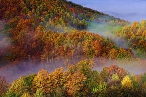Pădurea este în centrul celui mai mare scandal al toamnei/foto: Thomas Dan/Mediafax Foto