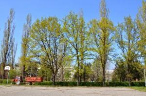 Și acești stejari ar fi trebuit tăiați pentru a face loc bazei de minifotbal / FOTO: Salvați Parcul Andrei Mureșanu!