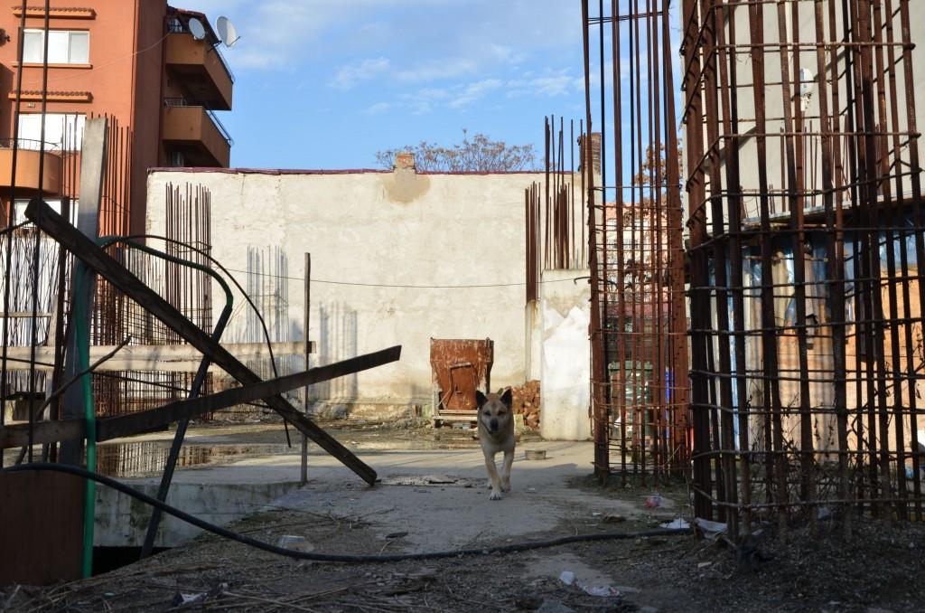 Blocul de la adresa Viitorului 158A, consemnat de Chiriță la capitolul realizări, nu a mai fost construit niciodată. Fundația lui e păzită de niște maidanezi devotați.