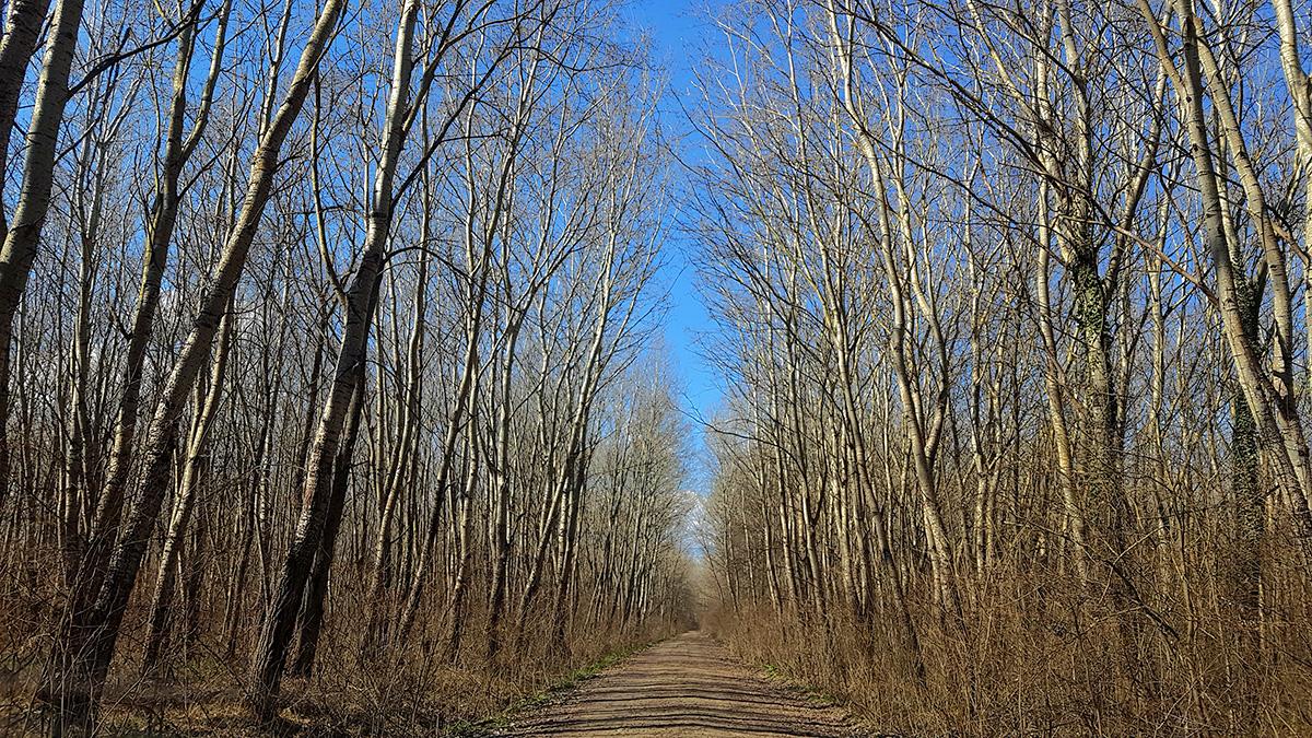 Pădurea Plopii Slăvitești