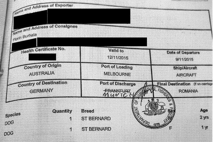 Documentele vamale depuse de fiscul australian prin care arată cum și când au fost aduși în România cățeii familiei Burhală. Foto: ABC News